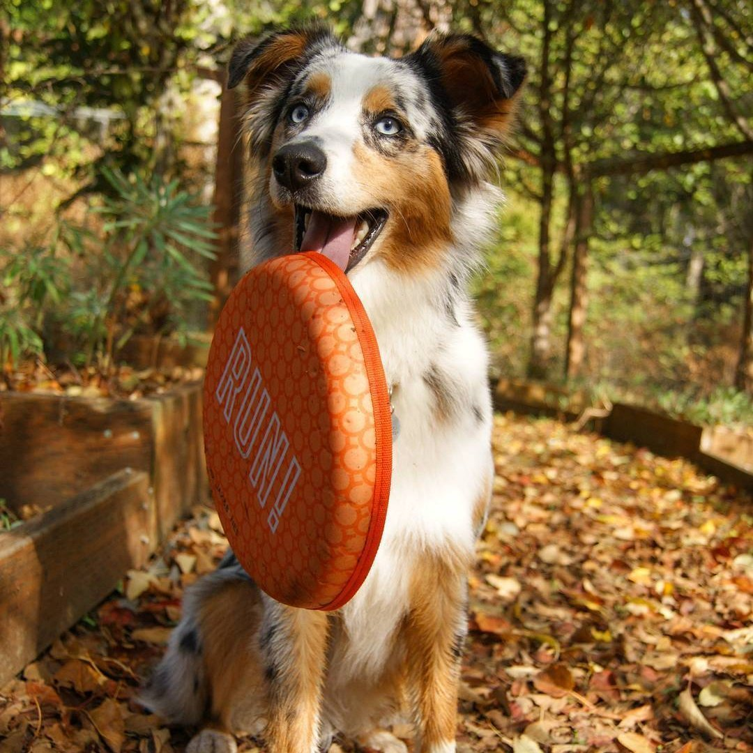 tough frisbee for dogs