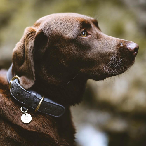 grey soft leather dog collar