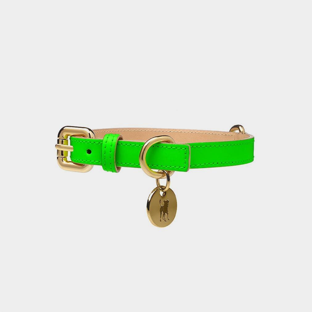 summer style dog collar
