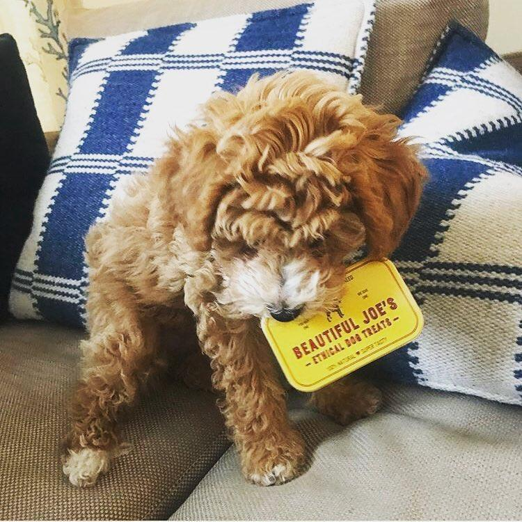 100% natural dog treat