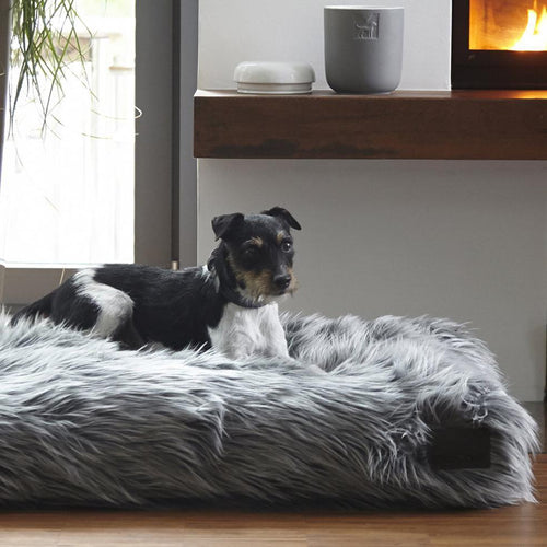 stylish dog bed uk