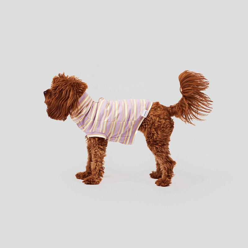 cute clothes for dogs