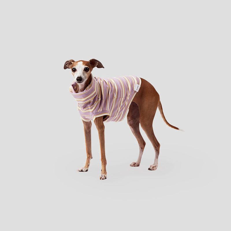 stylish whippet clothes