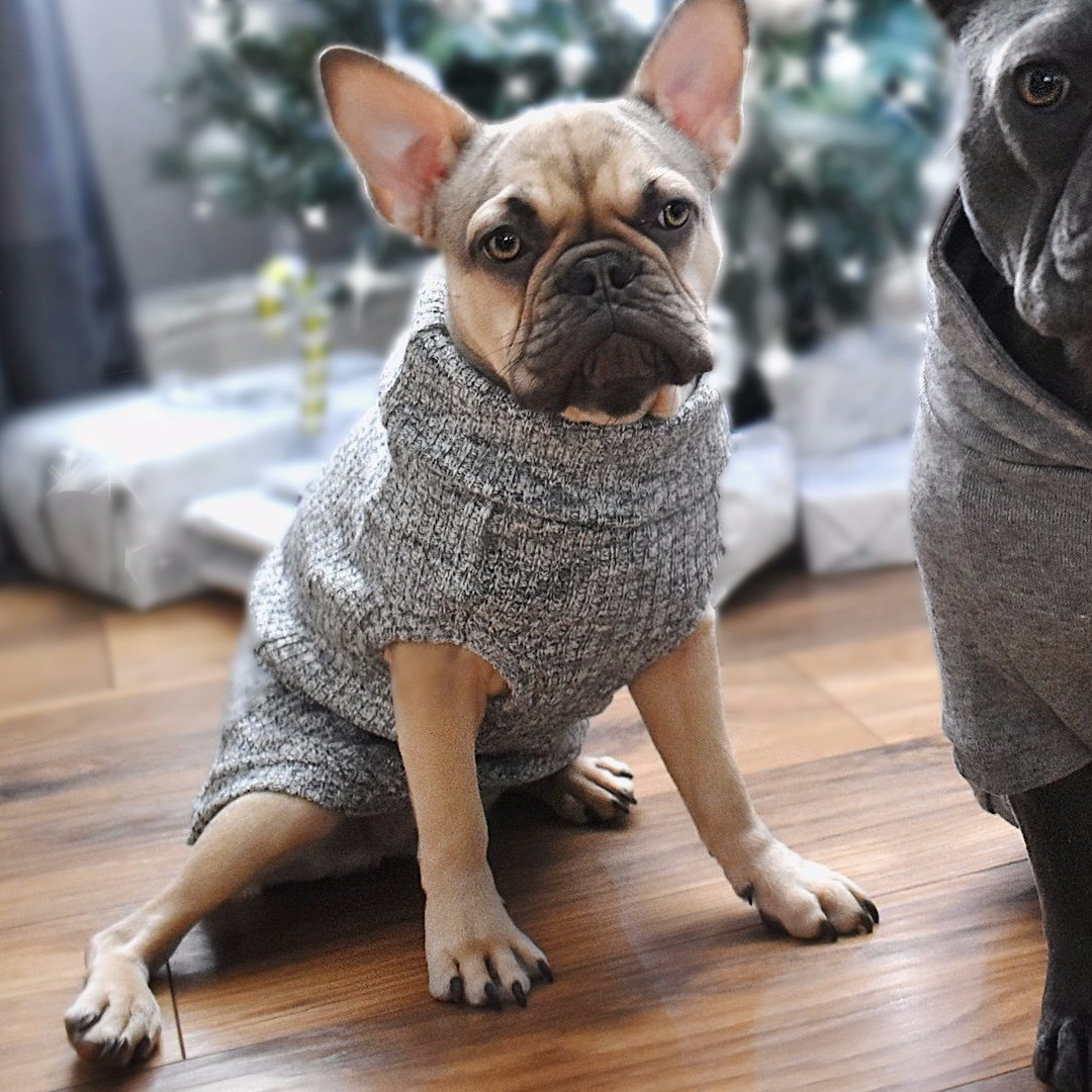 designer marl grey dog jumper for french bulldogs