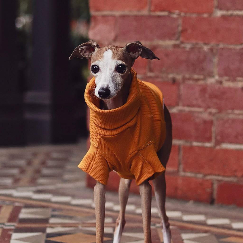 designer dog apparel for small dogs