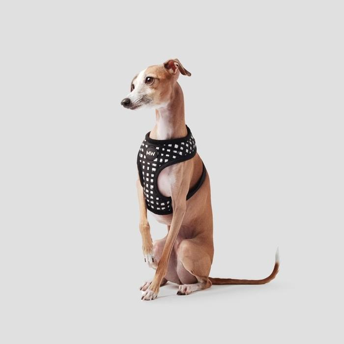 whippet harness