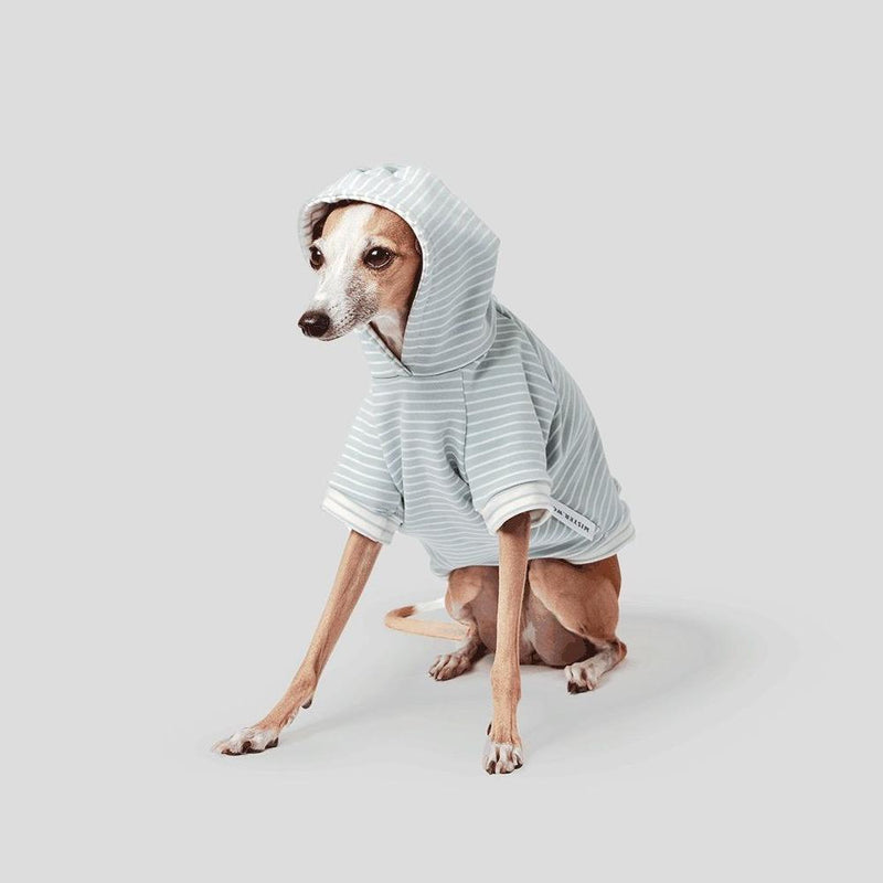 winter dog jumper