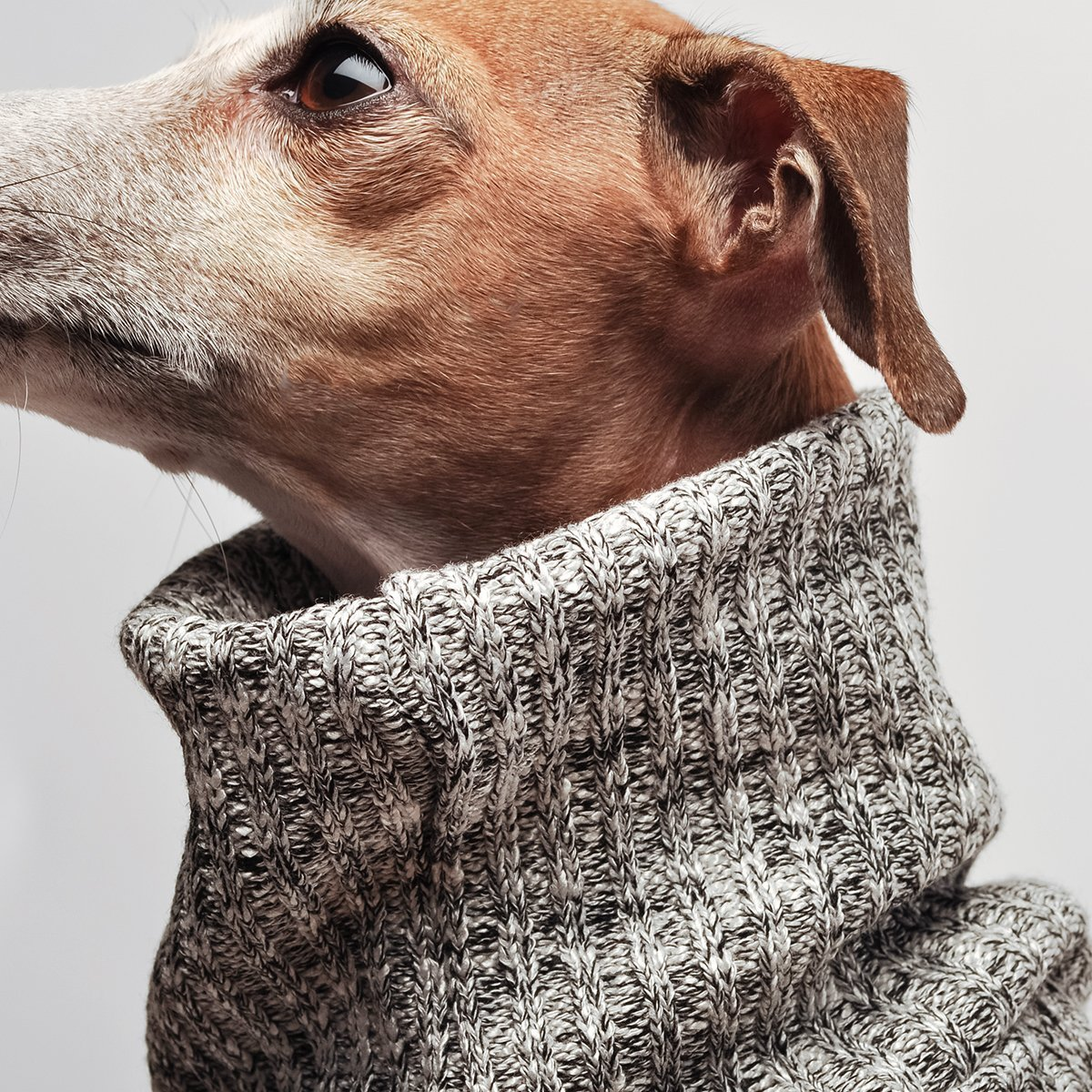 Mister Woof Cambridge Dog Turtleneck