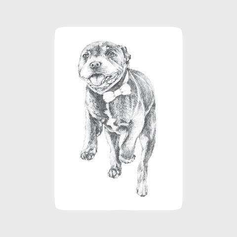 Staffordshire bull terrier dog art