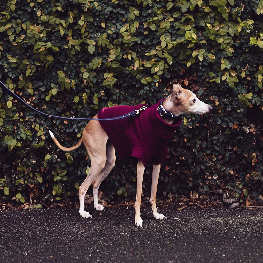 designer dog clothing for italian greyhounds