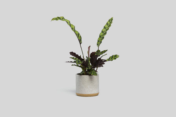 "Stoneware 5"" Planter (White Speckle)"