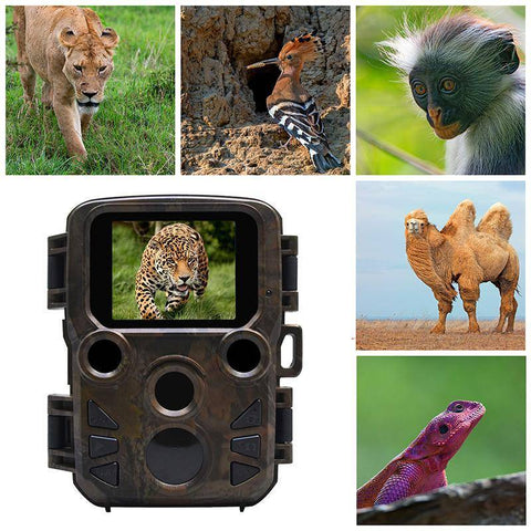 Trail Camera | Great Images Night or Day Cameras