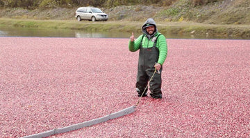 Why the CEO of BoKU and her son are crazy for cranberries…and why you should be too!
