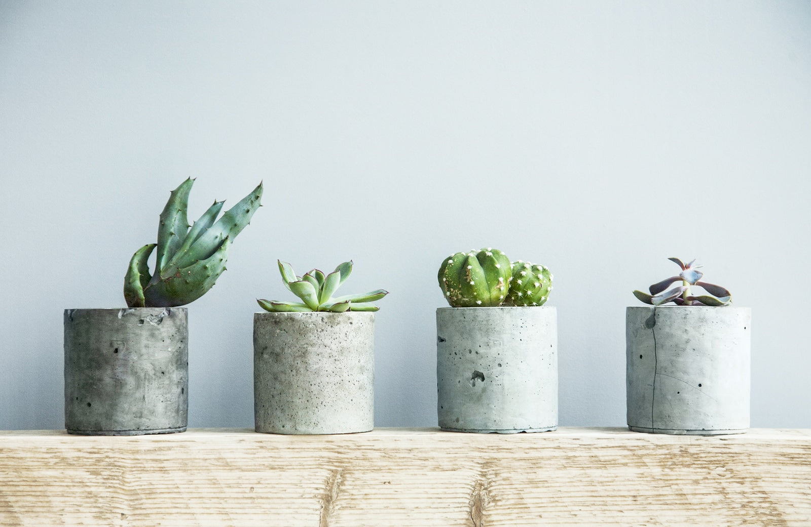 Succulents in diy concrete pot. Scandinavian room interior decoration