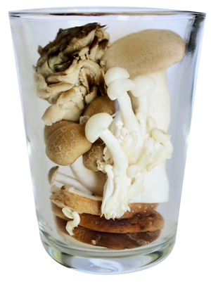 Shrooms Powders BoKU® Superfood | Mushroom powder | Immune system boost
