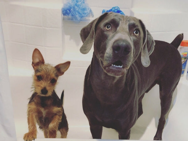 Self service dog wash thomaston feed online thomaston ct please note owners will not be able to cut hair or trim nails on site we apologize for the inconvenience solutioingenieria Image collections