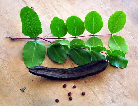 an image of a carob fruit laying on a table