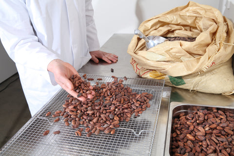 A man holding a handful of cacao beans | hunted & Gathered| www.coolfoodstuff.com