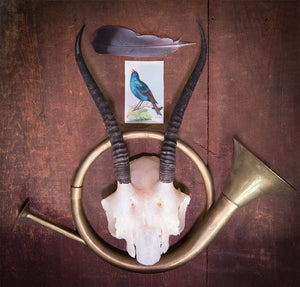 """On the Horns"" 2016, Assemblage"