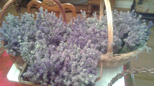 Lavender Boutique Farm