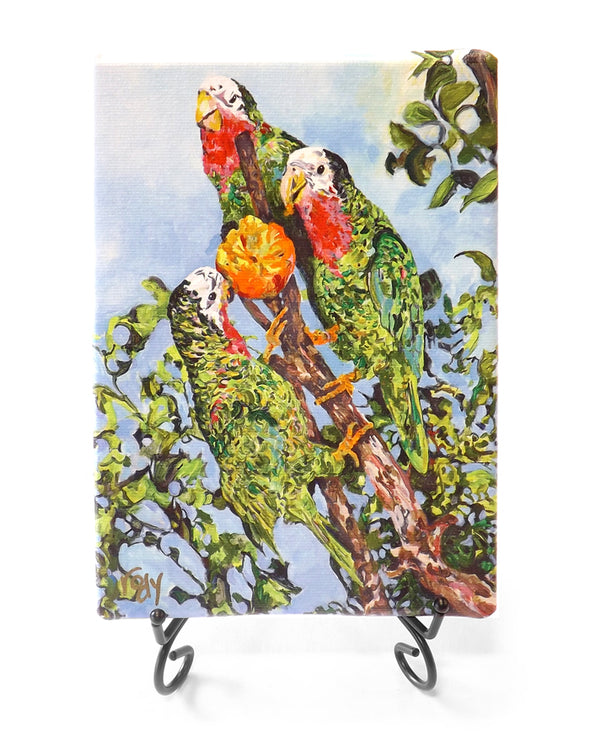 Abaco Parrots Mini Giclee