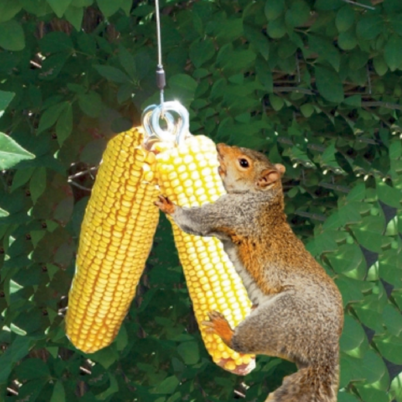 Bungee Jumping Squirrel Feeder