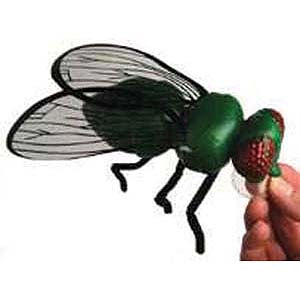 Enormous Fly