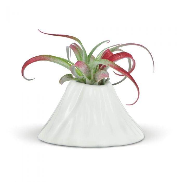 Fancy Plants Volcano Airplant Holder