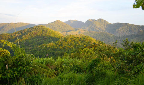 Mt. Manabu peak mountain view