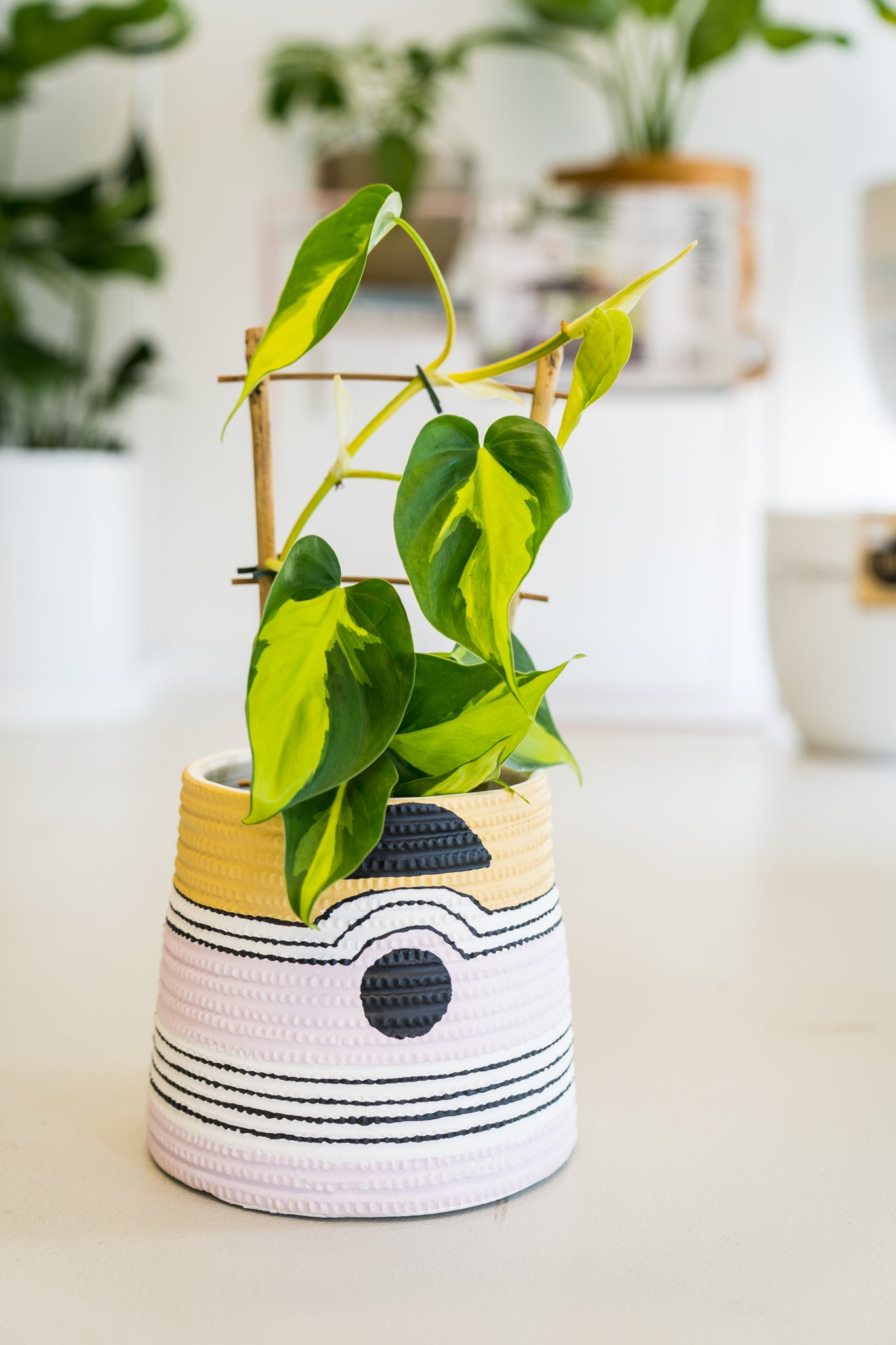 And now, a word from our stockists: Their top 3 houseplants for 2020