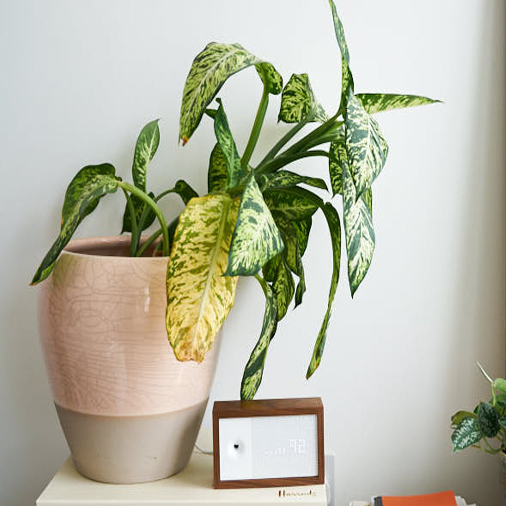 Plant Problems: Signs your plant isn't living their best life