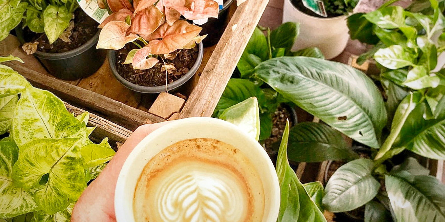 Reduce, Reuse, Recycle: How to Use Coffee Grounds on you Indoor Plants