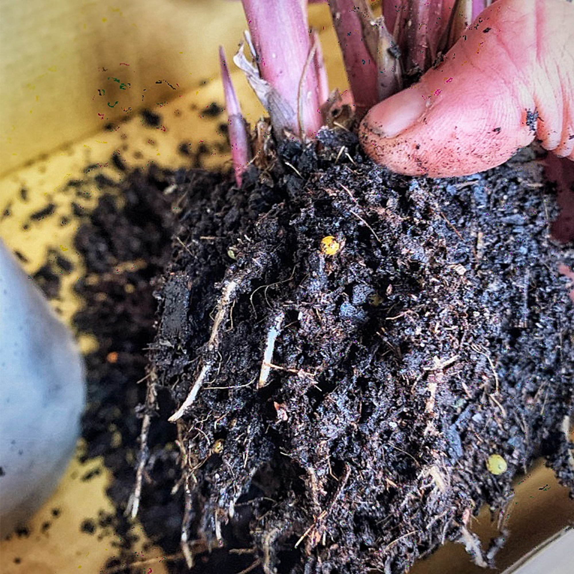 Dirty Talk: The Importance of Potting Mix