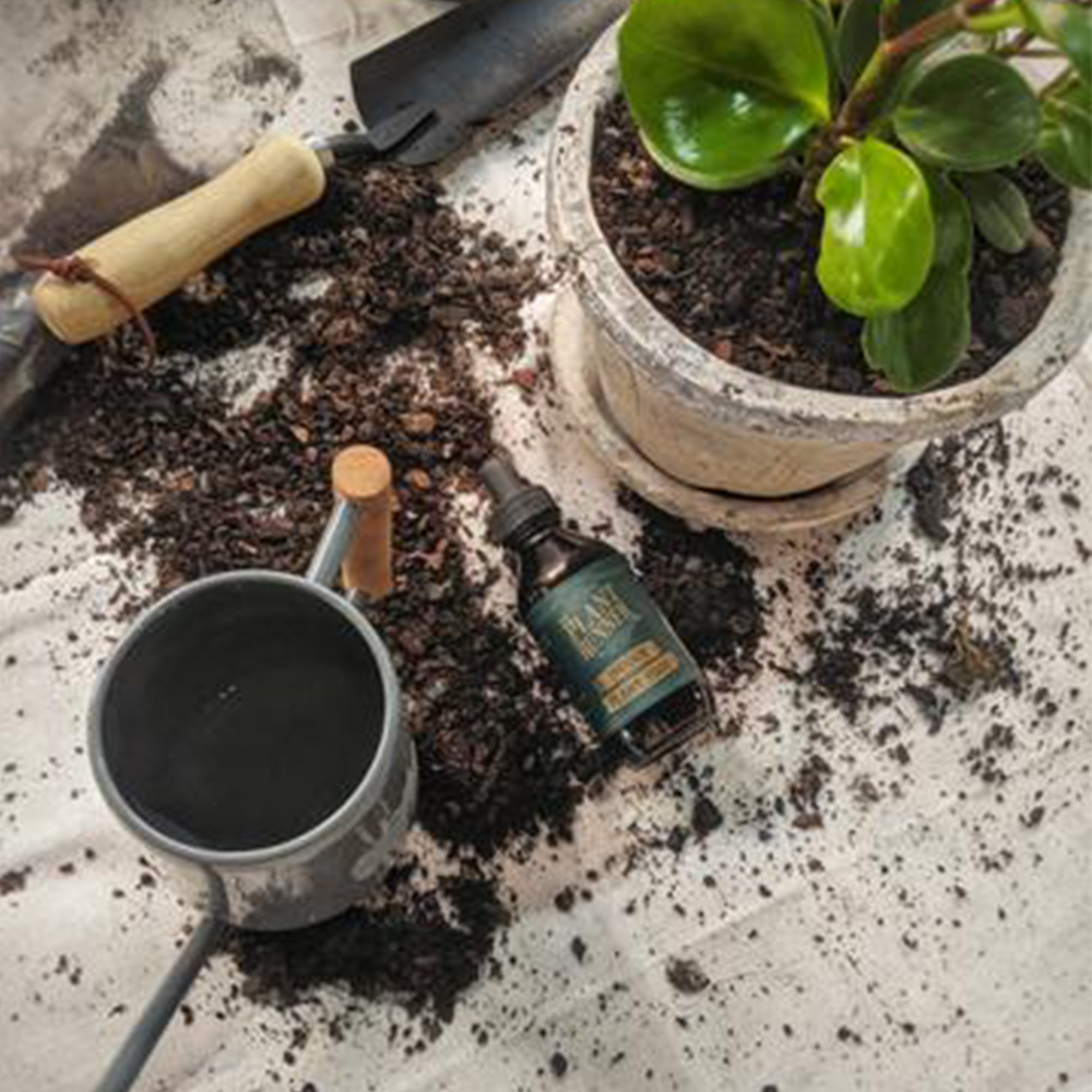 Potting Up: The When, The Why and The How