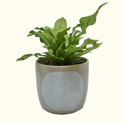 Made by Bowie Cloudy Day Planter