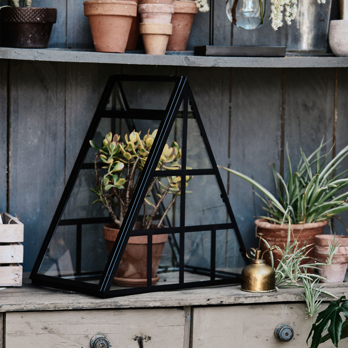 Constellation Terrarium by Merchants of Botanica