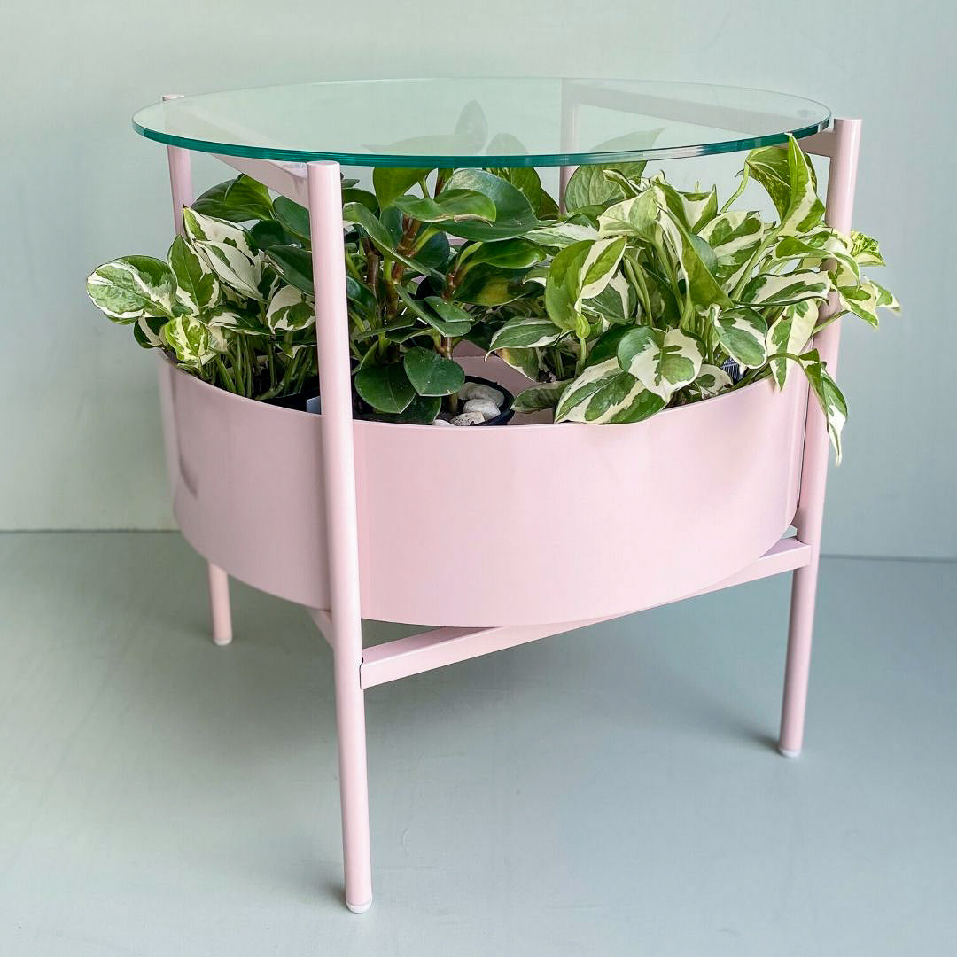 - Coffee Table Terrarium - The Plant Runner