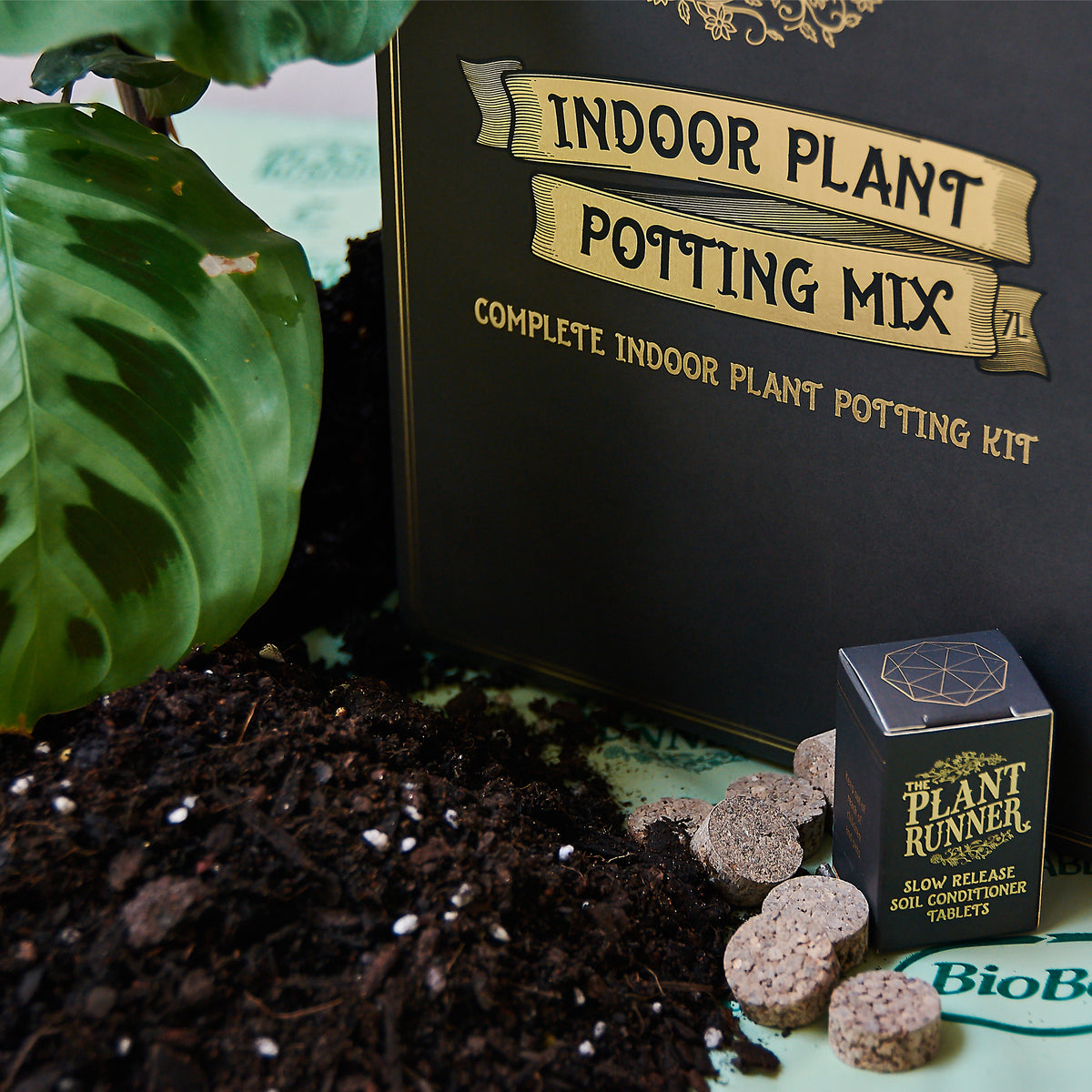 Indoor Plant Potting Kit - Wholesale
