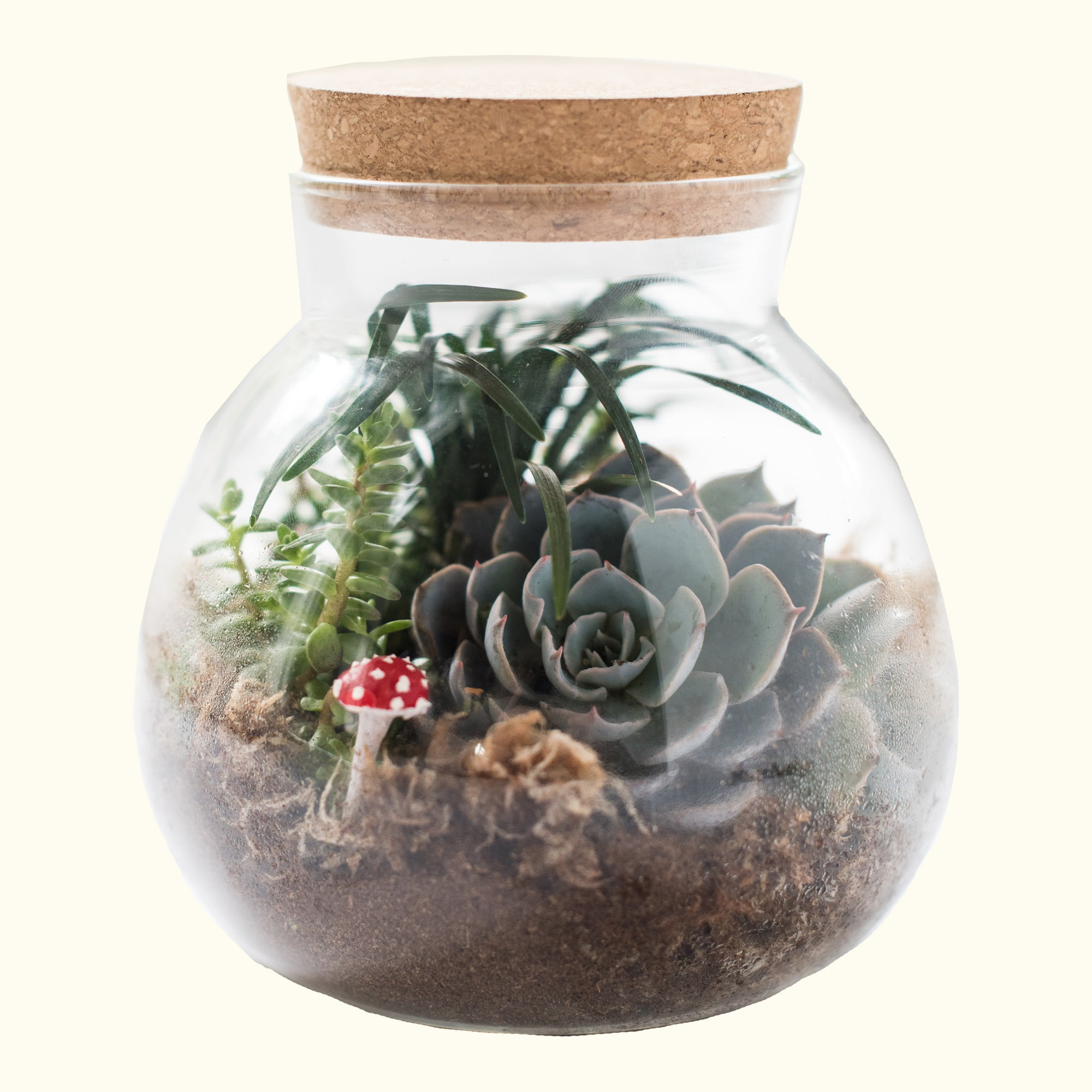 Mini Terrarium Kit
