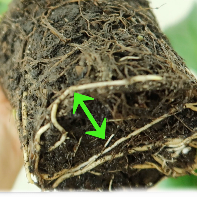 How To Get Rid of Root Rot [VIDEO]