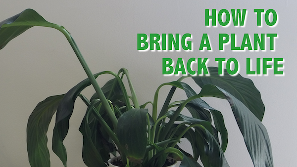 Rehydrating | Houseplant How-to Blog
