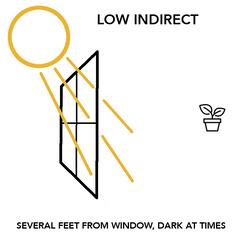 Low Indirect Light