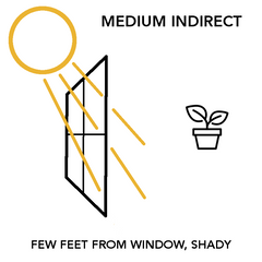 Medium Indirect Light