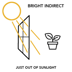 Bright Indirect Light
