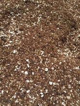 Potting Soil (Custom Organic Blend) 5oz - Pretty in Green Plants
