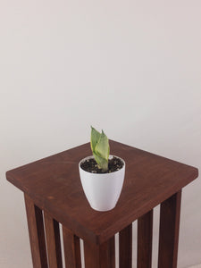 "Baby Snake Plant (Green Sansevieria Hahnii) in 3"" 3D Printed BioPot™"