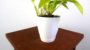 "White 4"" 3D Printed Pot Saucers - Set of 3 - Pretty in Green Plants"
