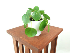 "RARE Pilea Peperomioides in 4"" 3D Printed BioPot™"
