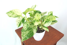 Above image of Marble Pothos houseplant in 3D Printed Biodegradable Pot