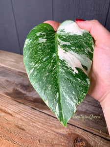 "Modern 3D Printed 8"" BioPot™️ - Large White or Black Planter with Drainage & Saucer - Eco Friendly Plant Pot Set"